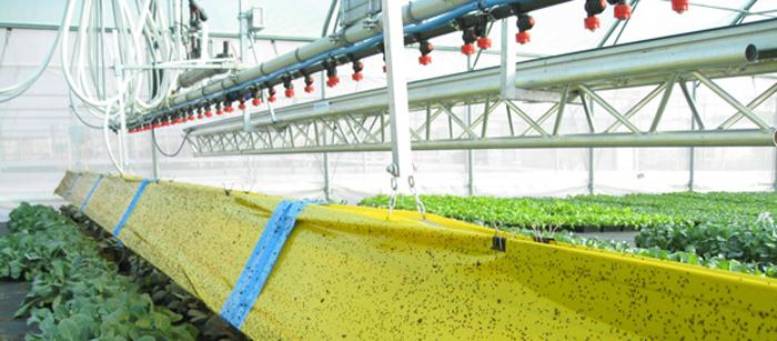 Fertilisation / irrigation